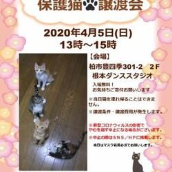 4/5(日)猫カフェ風保護猫譲渡会【お見合い会のみ実施】