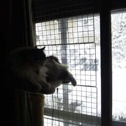 連日の積雪!