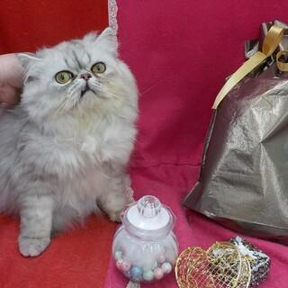 シャイですが美猫さんです。