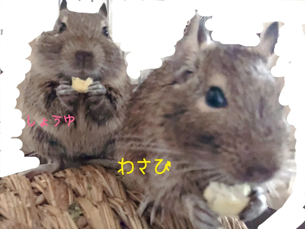 お話中】」大阪府 - 小動物の里親募集(303875) :: ペットのおうち ...