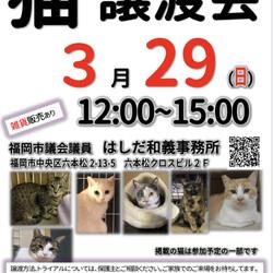 【開催中止】猫☆譲渡会