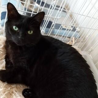 セサミンちゃん2歳オモチャ大好き黒猫女子