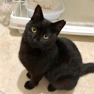 超フレンドリーな黒猫ちゃん( 3/15 譲渡会 )