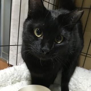 お見合い決定★うるつやで可愛い黒猫ちゃん