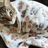 急募。美人母ちゃんとトラ子猫の親子 サムネイル4