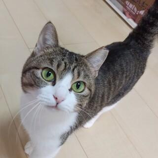 マリちゃん♬まん丸なお顔の美猫さん