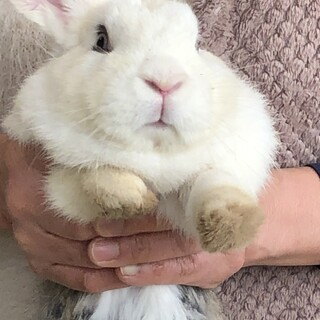 捨て子のウサギさん 里親募集