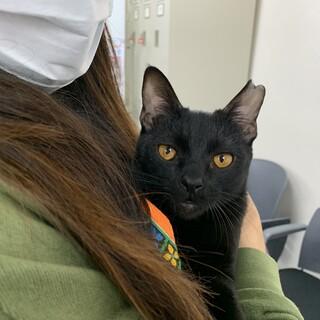 肩乗り黒猫ちゃんです。