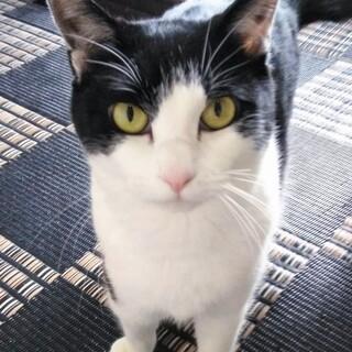 虐待を乗り越えた健気な美猫・セレーナさん