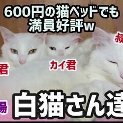 久々登場白猫~ず