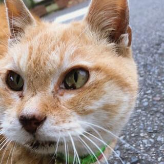 現在はアウトドア猫として当会がお世話中