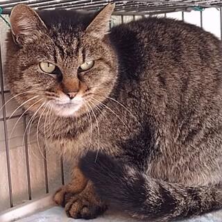 信頼度№1.猫がオーナーの「お見合い会」(洋菊)