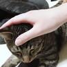 急募。美人母ちゃんとトラ子猫の親子 サムネイル5