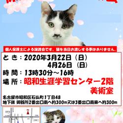 【中 止】保護猫の譲渡会