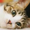 めぐねこ(目黒区 都会の猫を考える会)