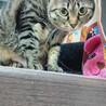 ケージ猫♪甘えたいけどビビりなの。