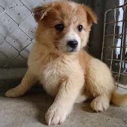 保護犬の譲渡会を開催します