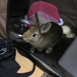 譲渡した仔ウサギが遺棄された可能性があるのです。