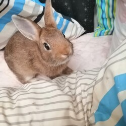 譲渡した仔ウサギが遺棄された可能性があるのです。サムネイル