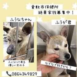 トッカータとフーガならぬふうなとふうが→譲渡決定!