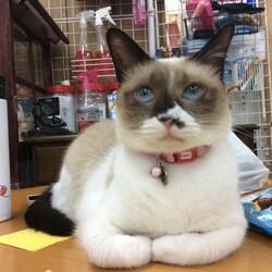 保護猫広場ラブとハッピー臨時休業のお知らせ