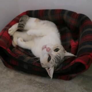 とっても穏やかで人懐っこいシニア猫さんです