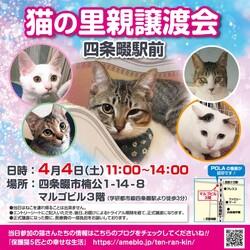 第2回 四條畷駅前 猫の譲渡会 延期決定