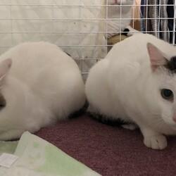 第2回 四條畷駅前 猫の譲渡会 延期決定 サムネイル3