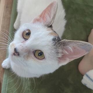 人も猫も大好き天真爛漫なモリハナエちゃん