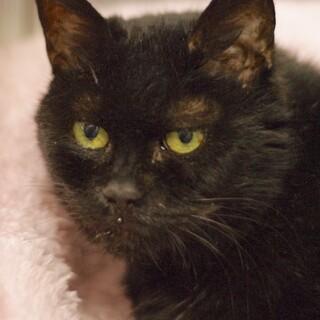 14歳 黒猫 くみちゃん♀