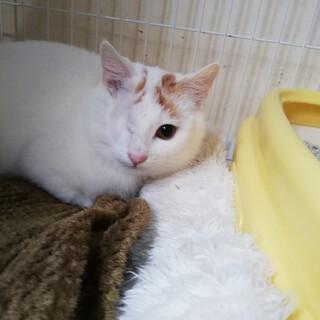 眼球的出手術を受けた子猫です