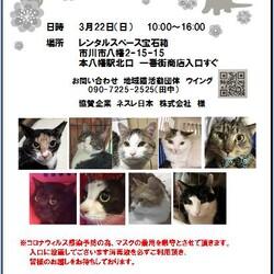 3/22(日)本八幡駅北口  一番街入口譲渡会