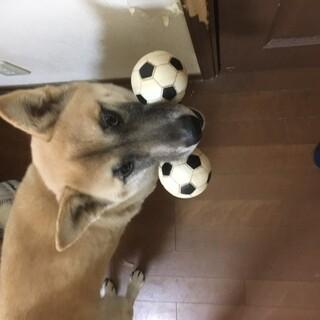 ※急募※犬の里親さまを募集しています