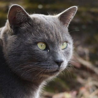 とっても甘えん坊さんなグレーのふわふわ猫です!