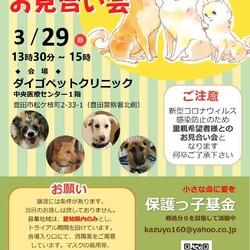 保護っ子基金 譲渡会(保護犬譲渡会)IN 豊田