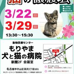 ▼猫の譲渡会▼名古屋市守山区