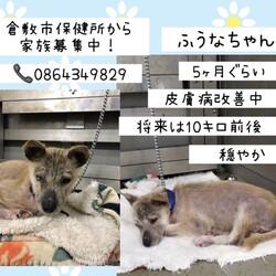 倉敷の愛おしい、ふうなちゃん→譲渡決定!