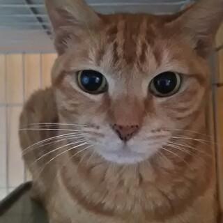 おとな猫ちゃんの家探し