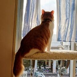 窓の外には何が見えるの?