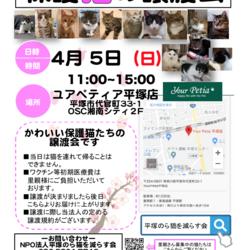 【開催中止】保護猫の譲渡会