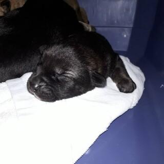 ちっちゃな野犬の赤ちゃん(兄弟姉妹全6匹います)