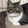 何でも!します、させます、やらせます愛猫マヤ サムネイル3
