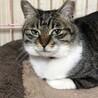 何でも!します、させます、やらせます愛猫マヤ サムネイル5