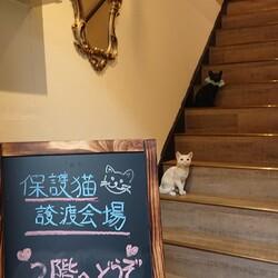 【開催中止】猫のすゝめ ~譲渡編 サムネイル3