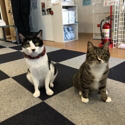 マンタと子猫