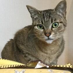 【開催中止】【要予約】猫ちゃんの里親譲渡会IN高井戸・杉並 サムネイル2
