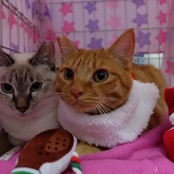 『保護猫のずっとのお家探し里親会』 サムネイル3