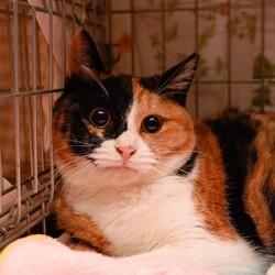 『TERRA里親会猫部』3/28は開催中止❗️ サムネイル1