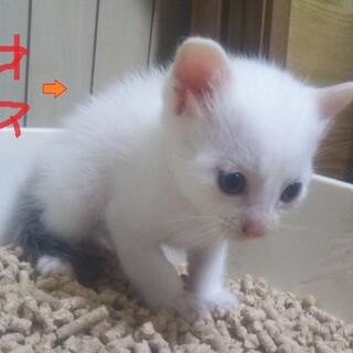 可愛い♡子猫ちゃんの里親になりませんか?