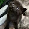 3月4日生まれの黒猫の男の子。 サムネイル2